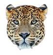 Leopard Family Products Page